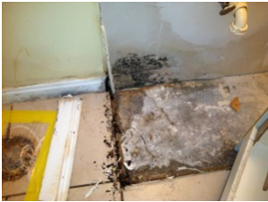 mold remediation by Complete Detail